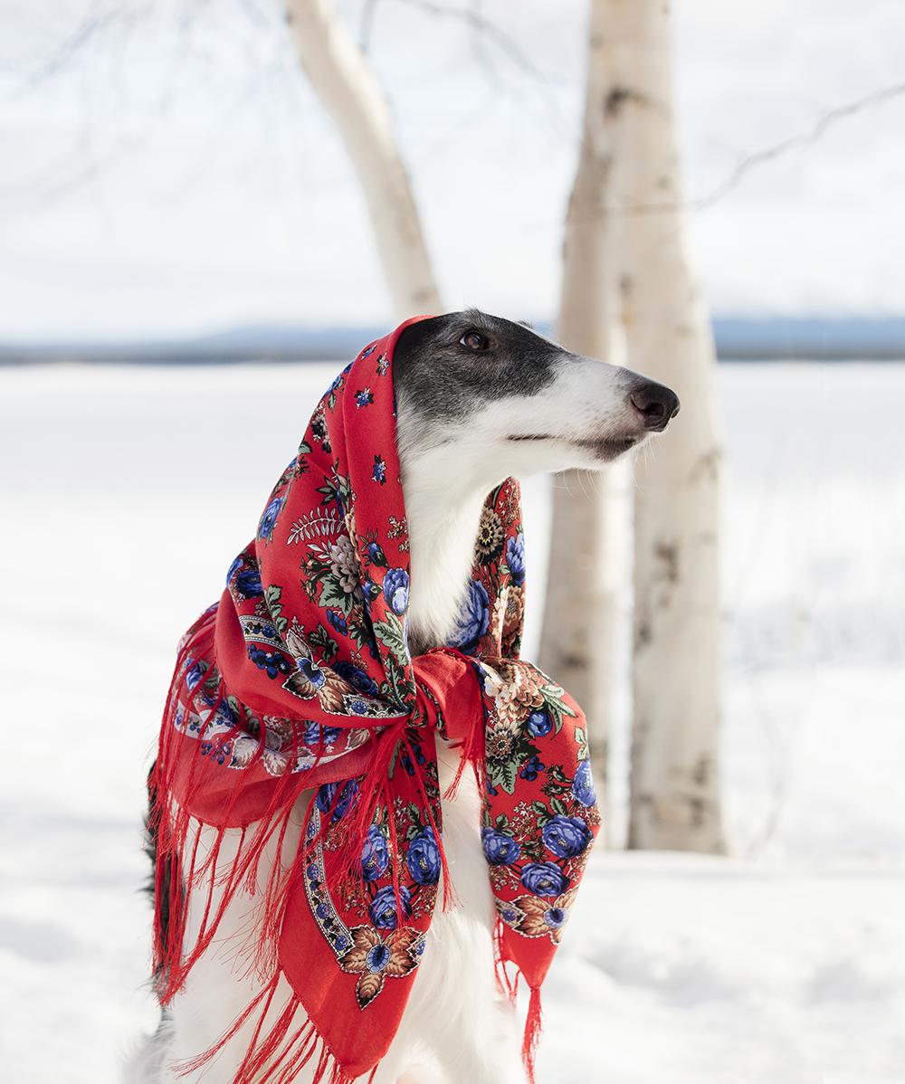 Hund 3