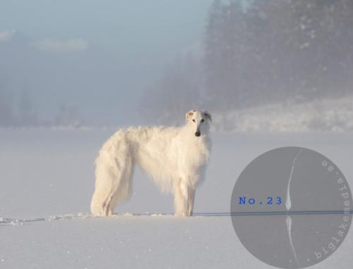 Russian-Boys-1---Borzoi-Dog-Photography