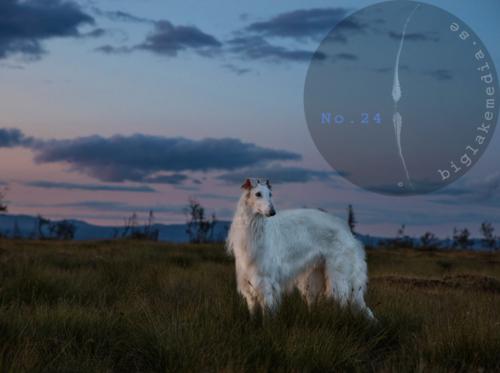 Russian-Boys---Borzoi-Dog-Photography