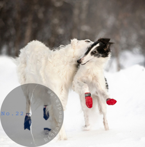 Russian-Boys--and-girls---Borzoi-Dog-Photography