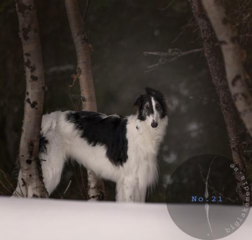 Russian-Girls--1---Borzoi-Dog-Photography-