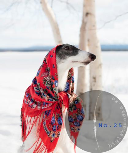 Russian-Girls---Borzoi-Dog-Photography-