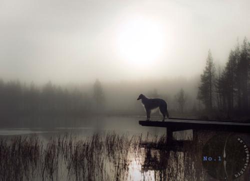 borzoi-dogphotography-sighthound-wolfhound