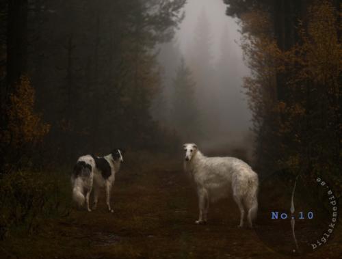 borzoi-dogphotography-sighthoundphotography-barzoi-windhund