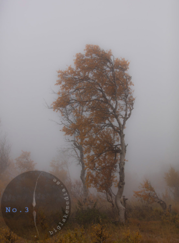 tree-naturephotography
