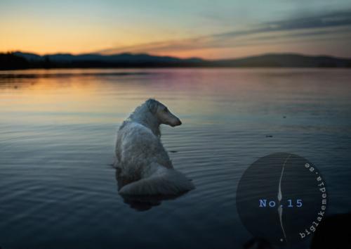 zarwoe-sighthoundphotography-dogphotography